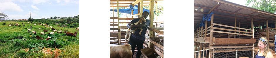 commercial goat farm