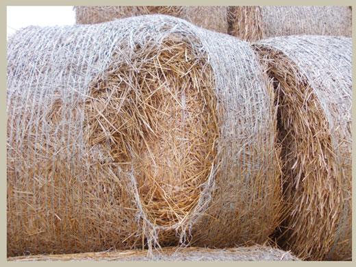 Bale Doctor Netwrap Understanding simple problems 2